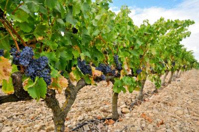 seminaire-Rioja-logroño-dégustation-vin-gastronomie-marques-de-riscal-congres-team-building-incentive-agence-evenementielle-Erronda