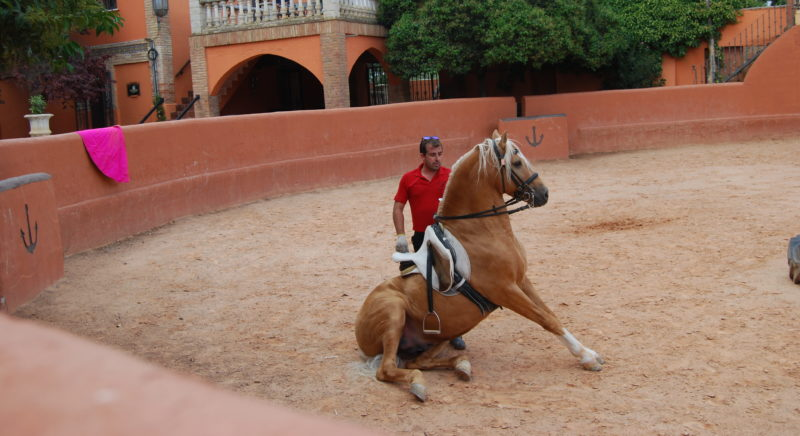 intervention consultant taurin torero agence evenementielle erronda pays basque
