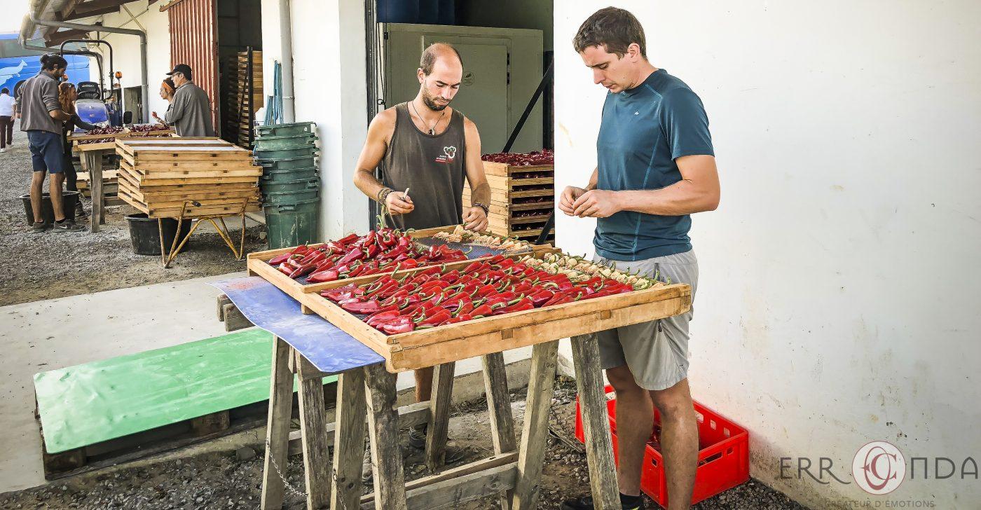 Photographie incentive journee decouverte pays basque voyage visite atelier piment espelette producteur nature agence evenementielle saint jean de luz erronda