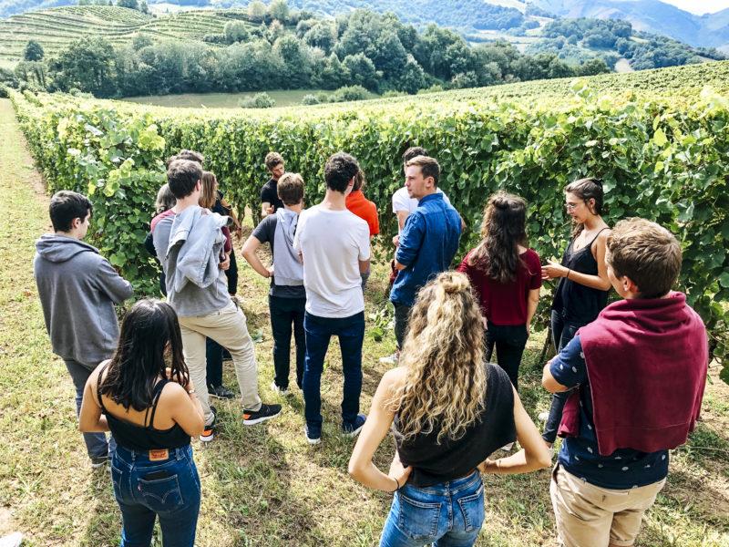 agence événementielle réceptive voyage pays basque erronda séminaire team building saint jean de luz irouléguy vin vignes degustation