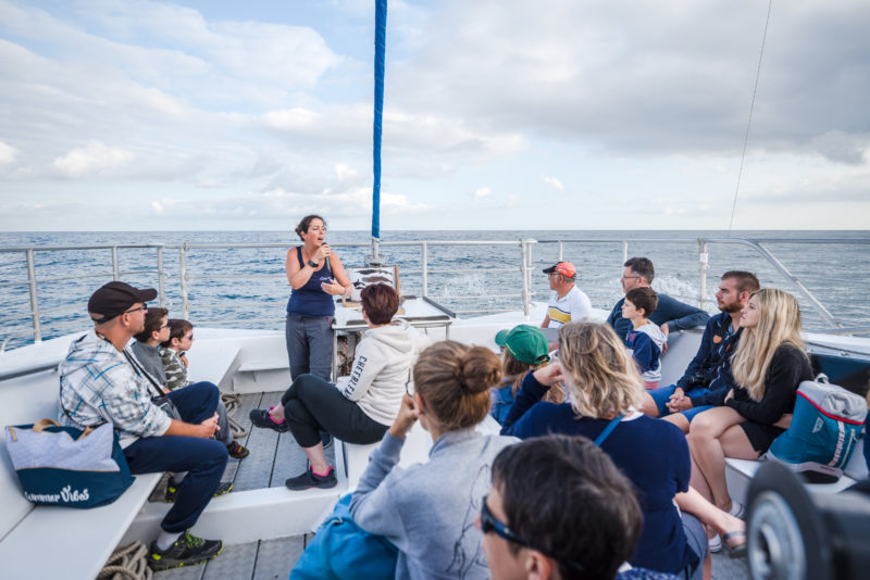 agence evenementielle receptive pays basque erronda seminaire team building incentive event explore ocean sortie bateau exploration cetacés