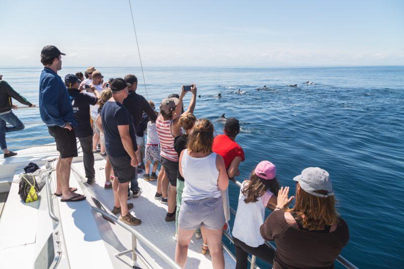 agence evenementielle receptive pays basque erronda seminaire team building incentive event explore ocean sortie bateau exploration cetacés dauphins